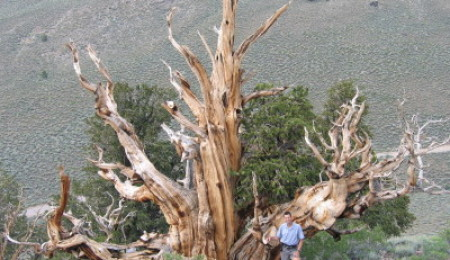 The oldest living organism